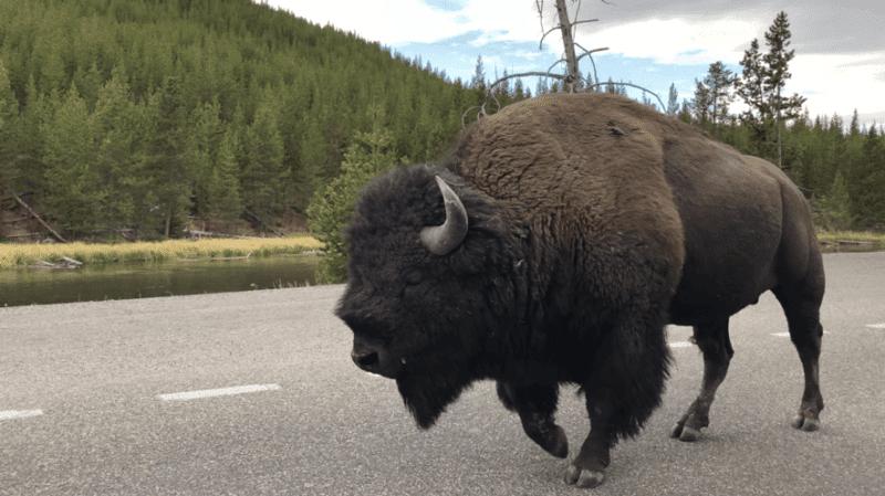Roteiro de carro pelos parques do Canada