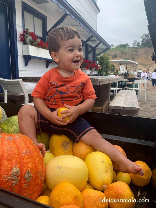 Caio se divertindo na pilha de abóboras em Malibu - Califórnia