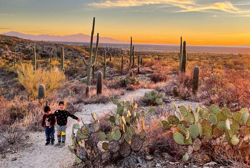 Por do sol no Saguaro National Park em Tucson