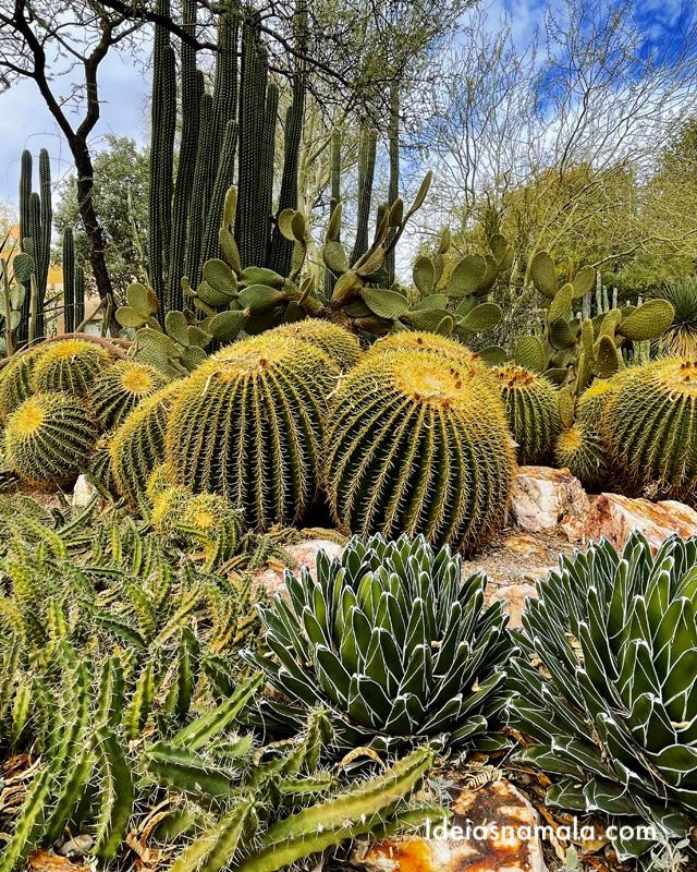 Cactos do Jardim Botânico de Tucson no Arizona