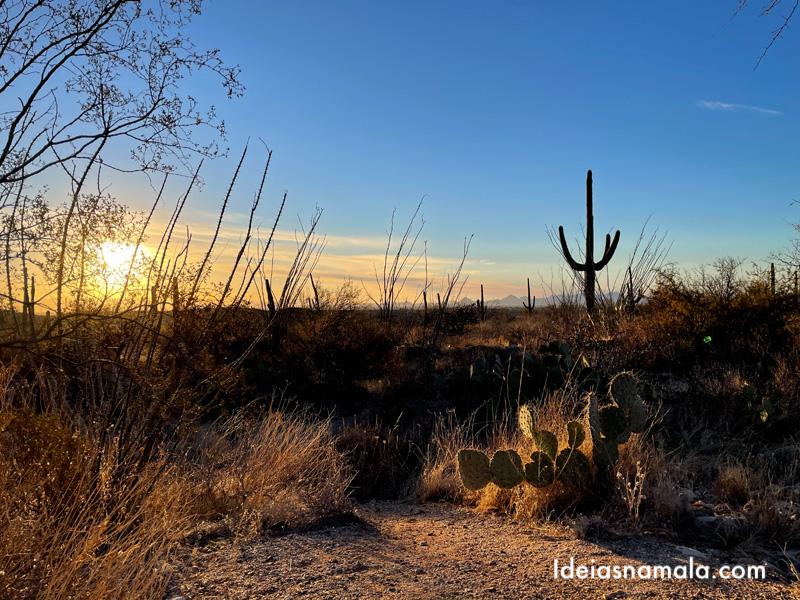 Rincon Mountain District ou Saguaro East em Tucson