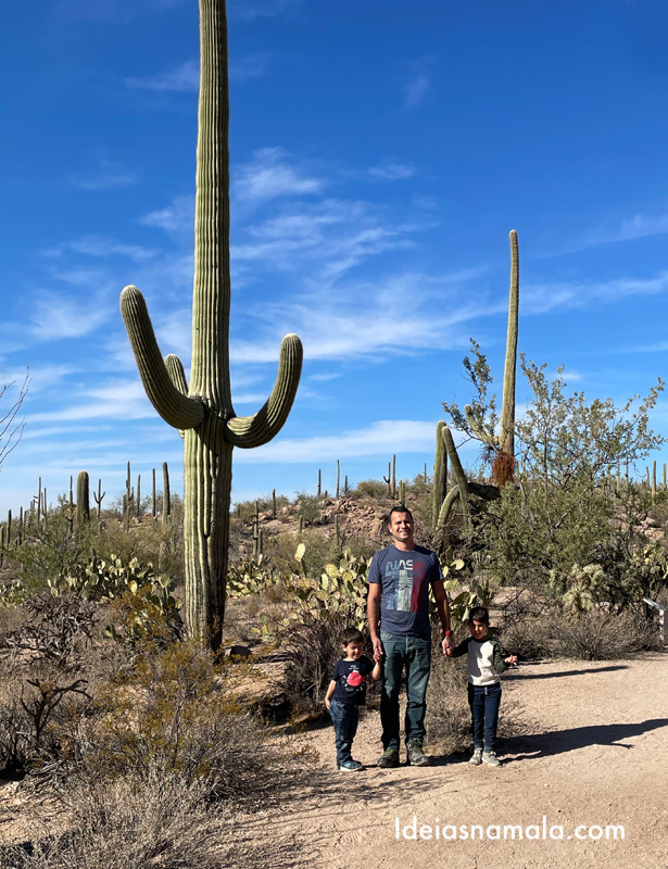 Saguaro National Park em Tucson