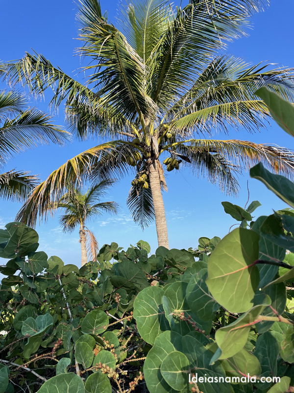 Natureza linda da ilha Captiva